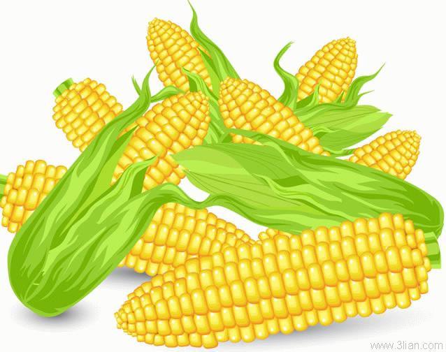 corn-13492